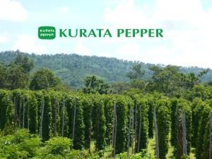 倉田浩伸 カンボジアの世界一の胡椒の再生 社会貢献